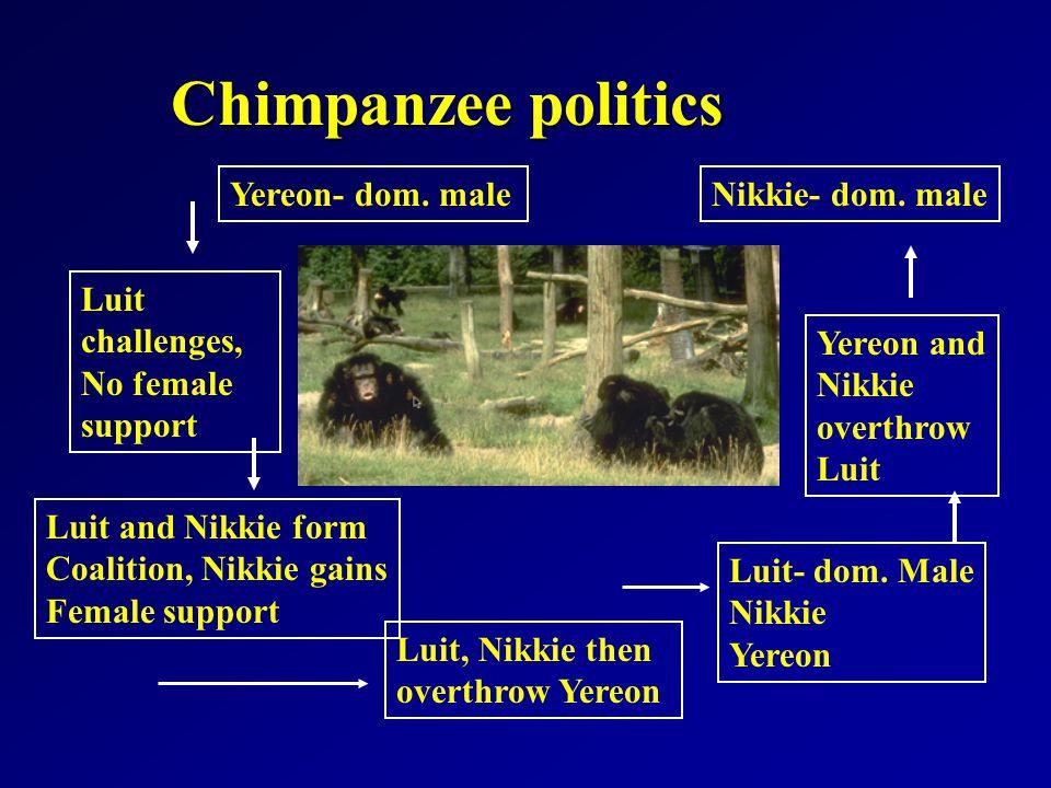 Chimpanzee politics Yereon- dom.