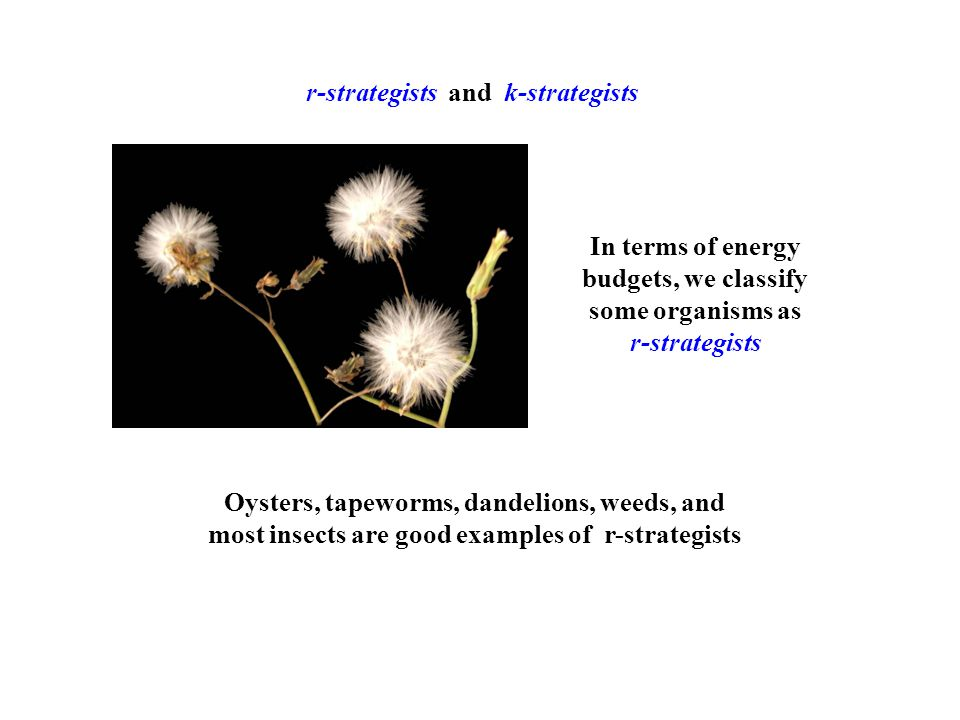 r-strategists and k-strategists In terms of energy budgets, we classify some organisms as r-strategists Oysters, tapeworms, dandelions, weeds, and most insects are good examples of r-strategists