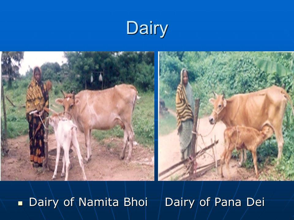Dairy Dairy of Namita Bhoi Dairy of Pana Dei Dairy of Namita Bhoi Dairy of Pana Dei