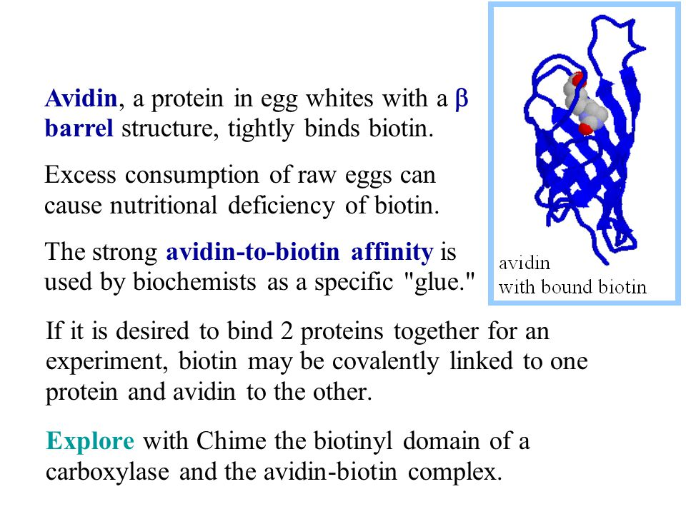 If it is desired to bind 2 proteins together for an experiment, biotin may be covalently linked to one protein and avidin to the other.