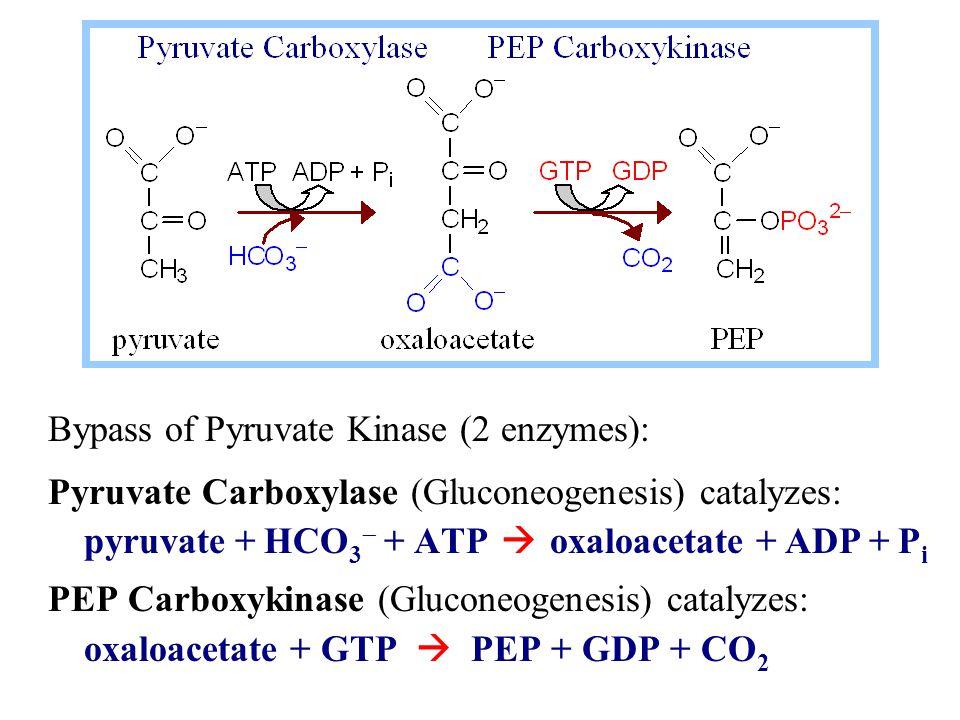 Bypass of Pyruvate Kinase (2 enzymes): Pyruvate Carboxylase (Gluconeogenesis) catalyzes: pyruvate + HCO 3  + ATP  oxaloacetate + ADP + P i PEP Carboxykinase (Gluconeogenesis) catalyzes: oxaloacetate + GTP  PEP + GDP + CO 2