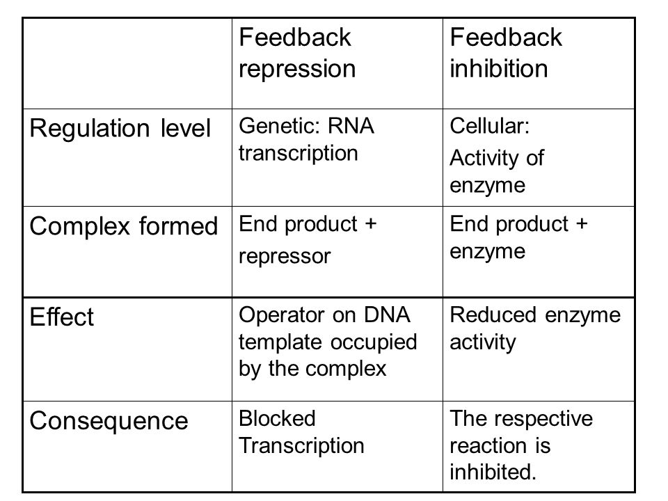 Reduced enzyme activity Operator on DNA template occupied by the complex Effect End product + enzyme End product + repressor Complex formed The respective reaction is inhibited.