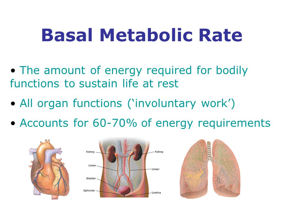 Basal Metabolic Rate The amount of energy required for bodily functions to sustain life at rest All organ functions ('involuntary work') Accounts for 60-70% of energy requirements