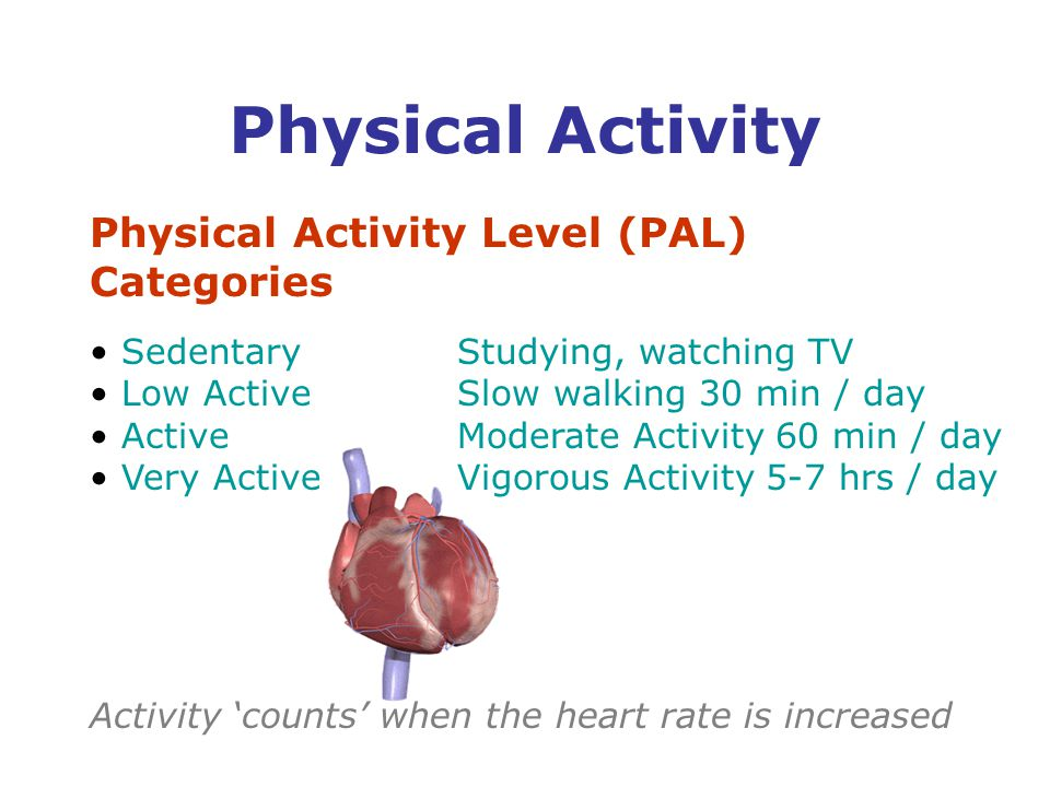 Physical Activity Level (PAL) Categories SedentaryStudying, watching TV Low ActiveSlow walking 30 min / day ActiveModerate Activity 60 min / day Very