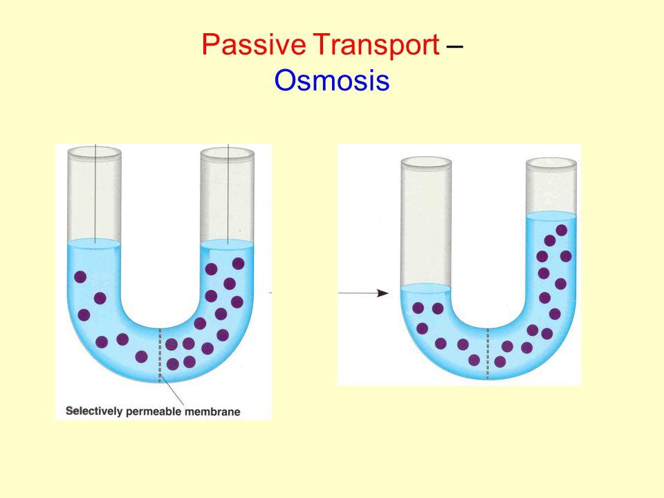 Passive Transport – Osmosis