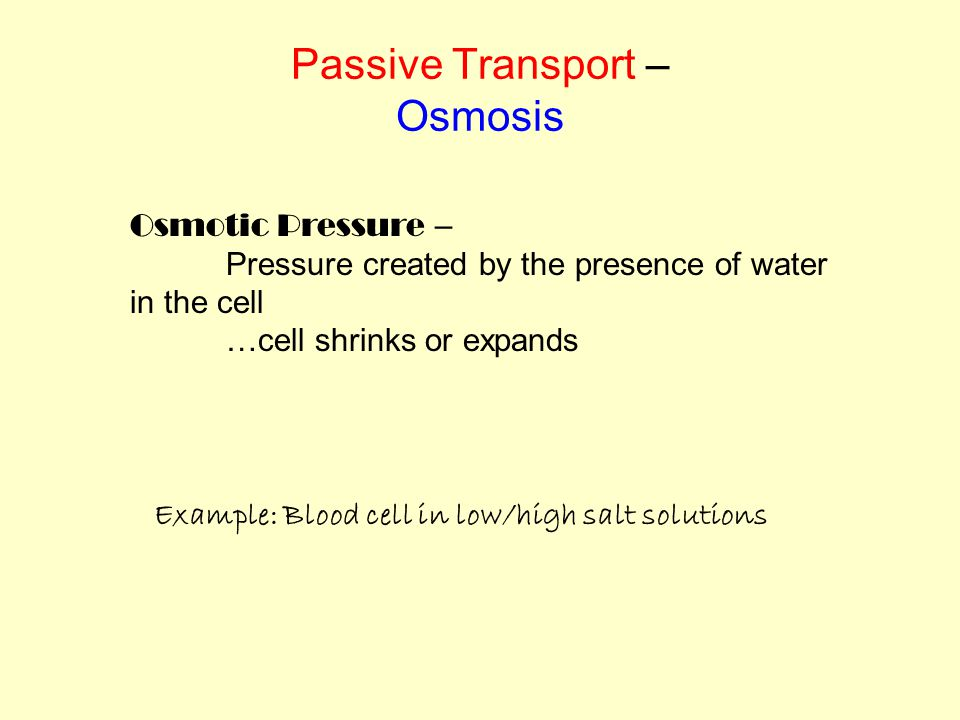 Osmotic Pressure – Pressure created by the presence of water in the cell …cell shrinks or expands Example: Blood cell in low/high salt solutions