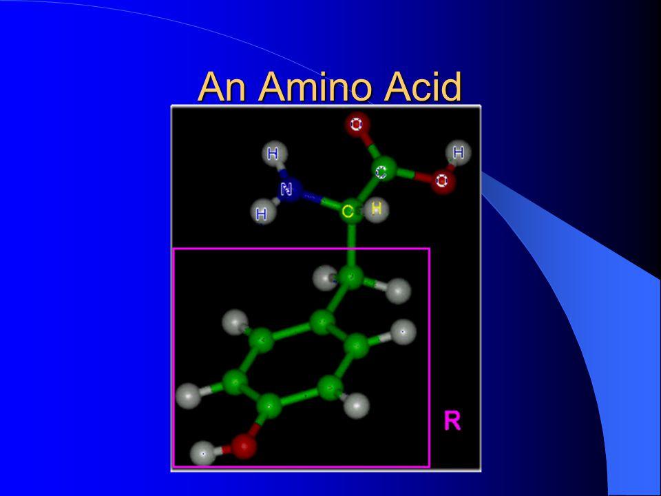 An Amino Acid