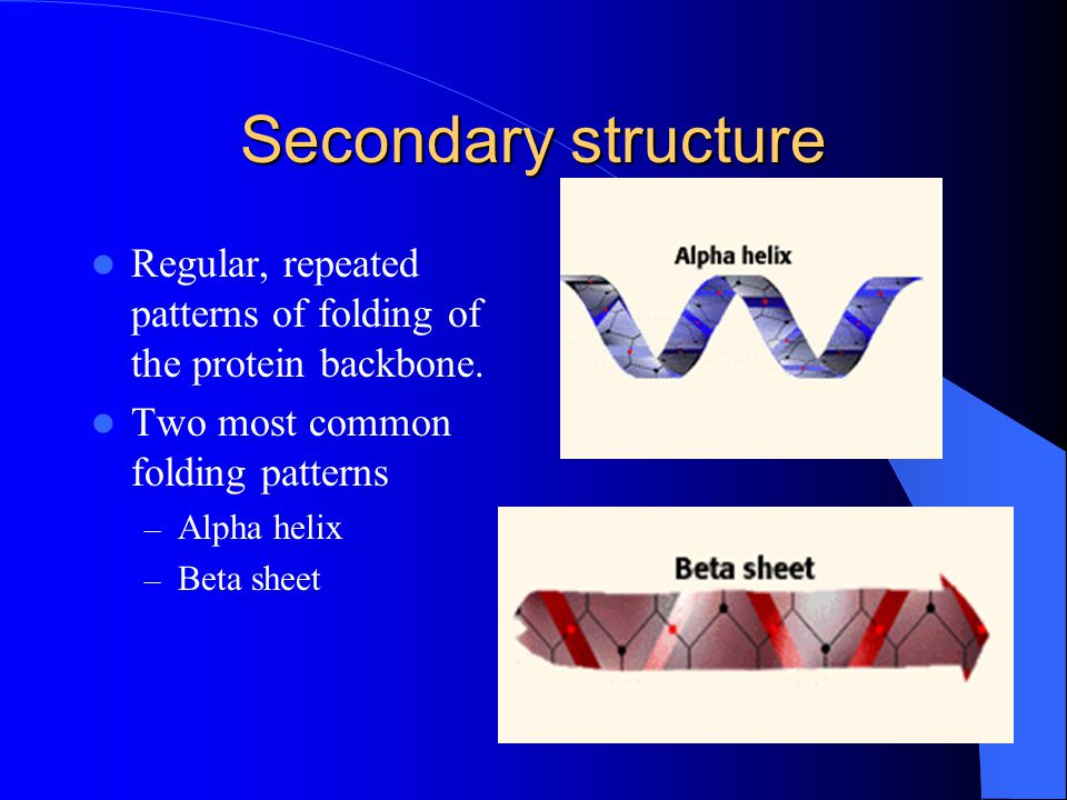 Secondary structure Regular, repeated patterns of folding of the protein backbone.