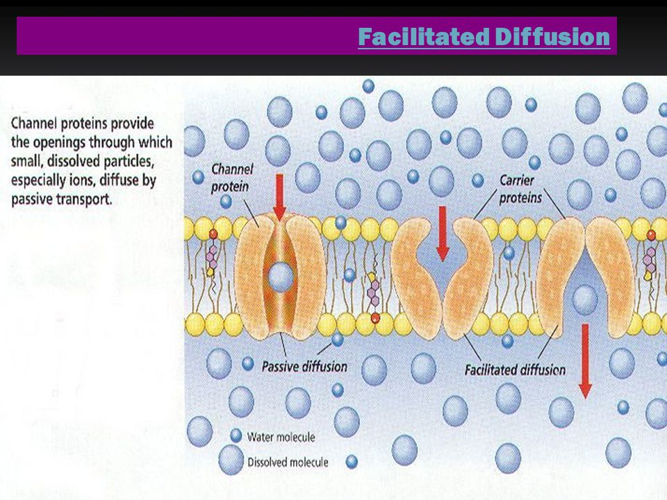 Facilitated Diffusion Diffusion made easy Diffusion made easy No energy required, goes with the concentration gradient No energy required, goes with the concentration gradient Embedded proteins (channels) provide a convenient pathway for LARGE and/or charged substances to pass thru cell membrane.