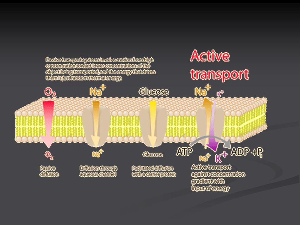 Active Transport: Pumps