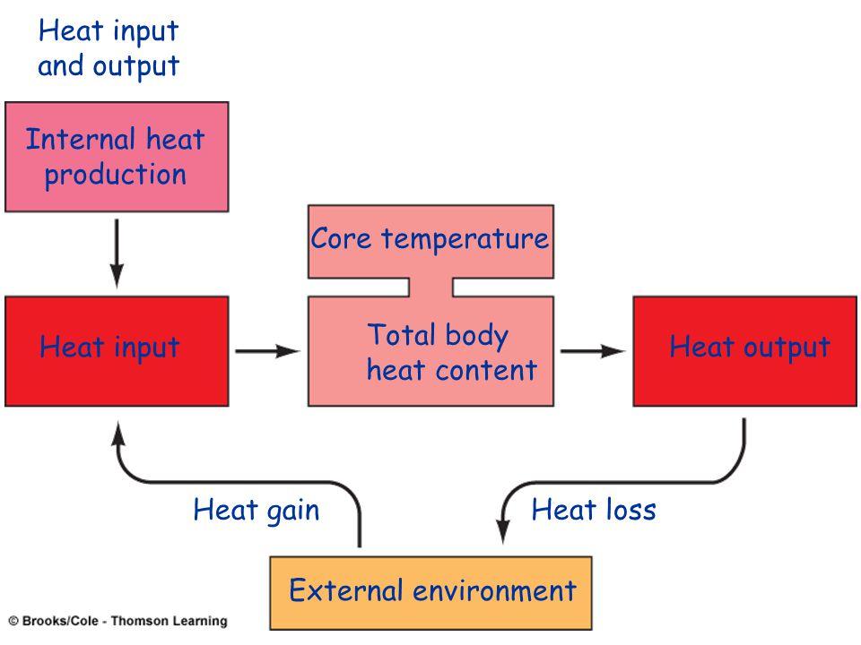 Internal heat production Heat input Total body heat content Core temperature Heat output External environment Heat input and output Heat gainHeat loss