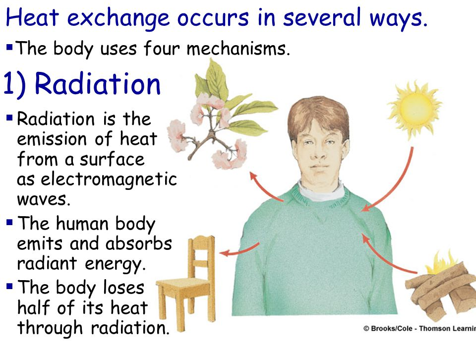 Heat exchange occurs in several ways. 1) Radiation  The body uses four mechanisms.