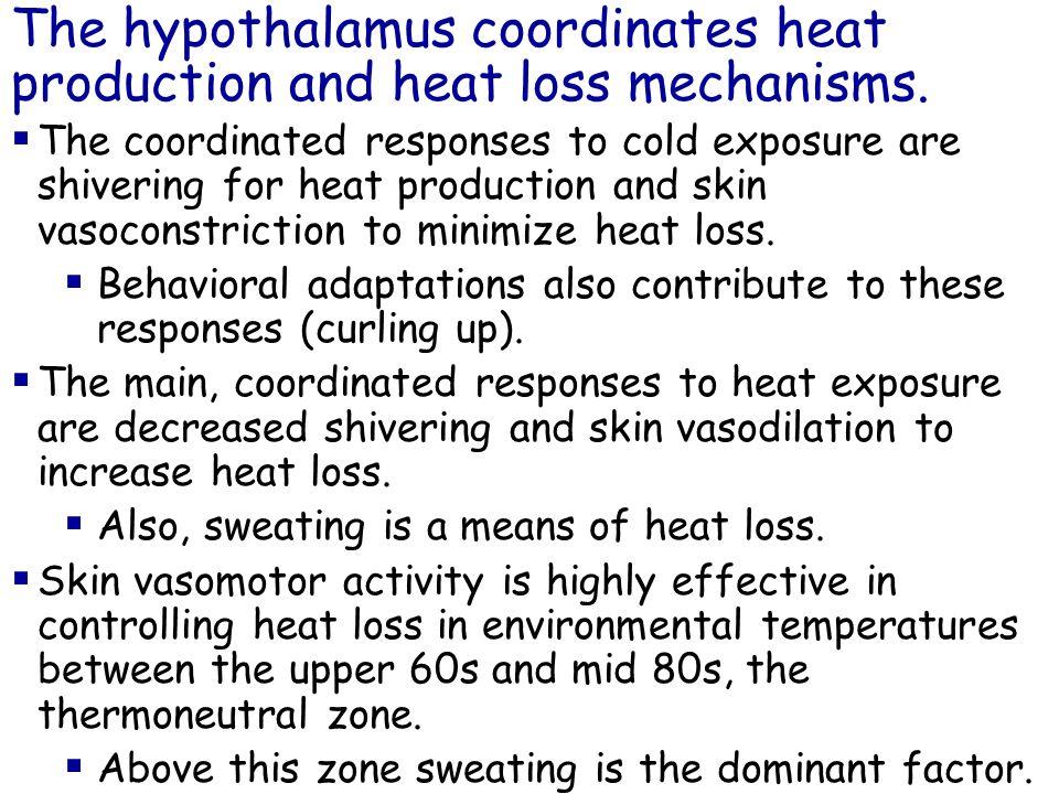 The hypothalamus coordinates heat production and heat loss mechanisms.