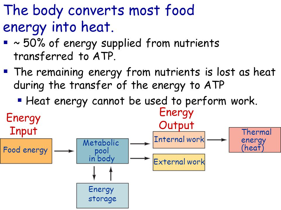 ~ 50% of energy supplied from nutrients transferred to ATP.