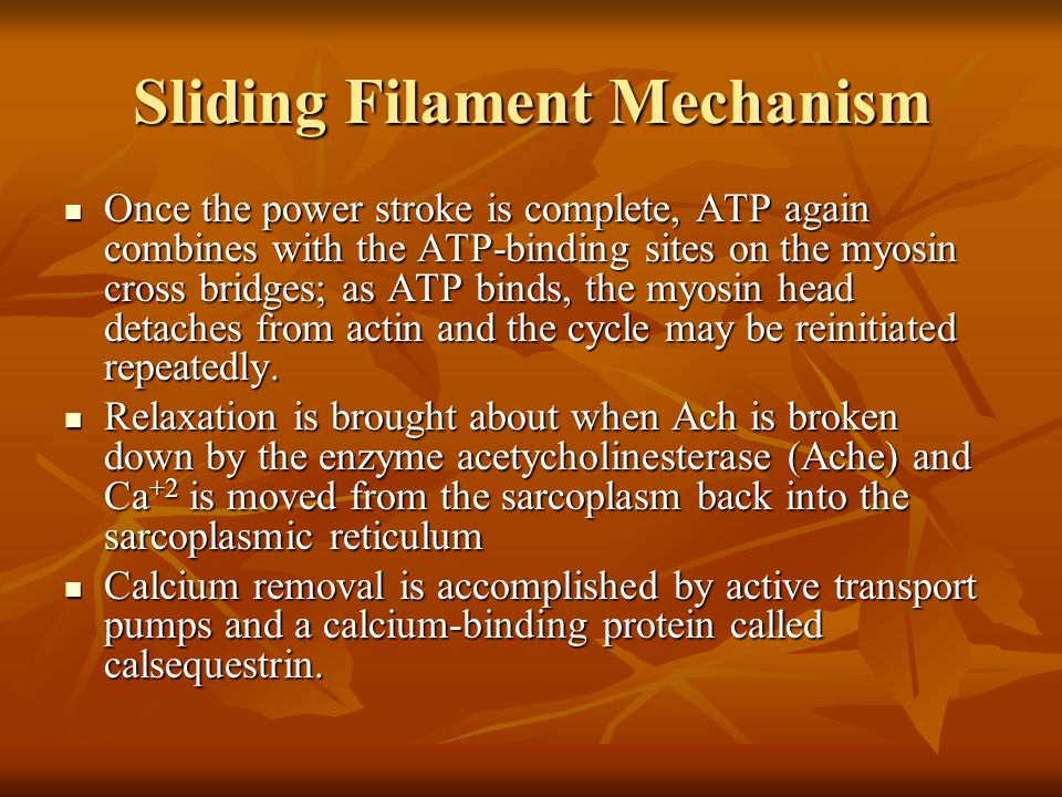 Sliding Filament Mechanism Once the power stroke is complete, ATP again combines with the ATP-binding sites on the myosin cross bridges; as ATP binds,