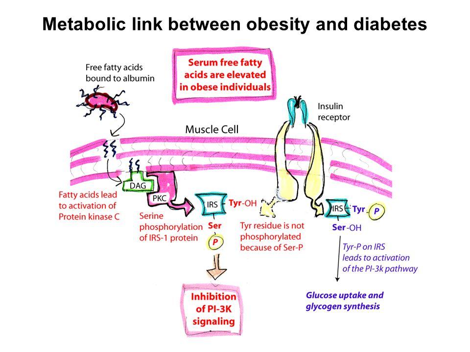 Metabolic link between obesity and diabetes