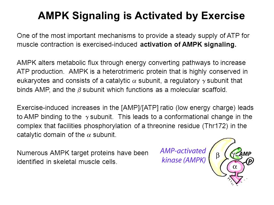 One of the most important mechanisms to provide a steady supply of ATP for muscle contraction is exercised-induced activation of AMPK signaling.