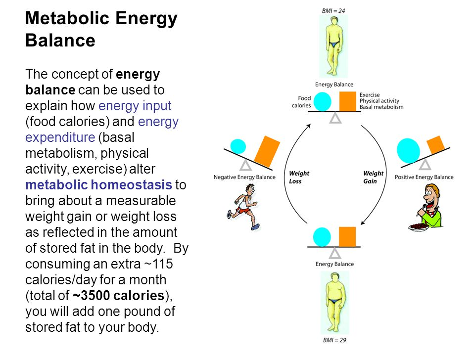 Metabolic Energy Balance The concept of energy balance can be used to explain how energy input (food calories) and energy expenditure (basal metabolism, physical activity, exercise) alter metabolic homeostasis to bring about a measurable weight gain or weight loss as reflected in the amount of stored fat in the body.