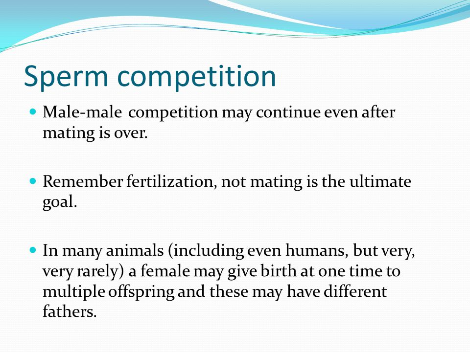 Sperm competition Male-male competition may continue even after mating is over.
