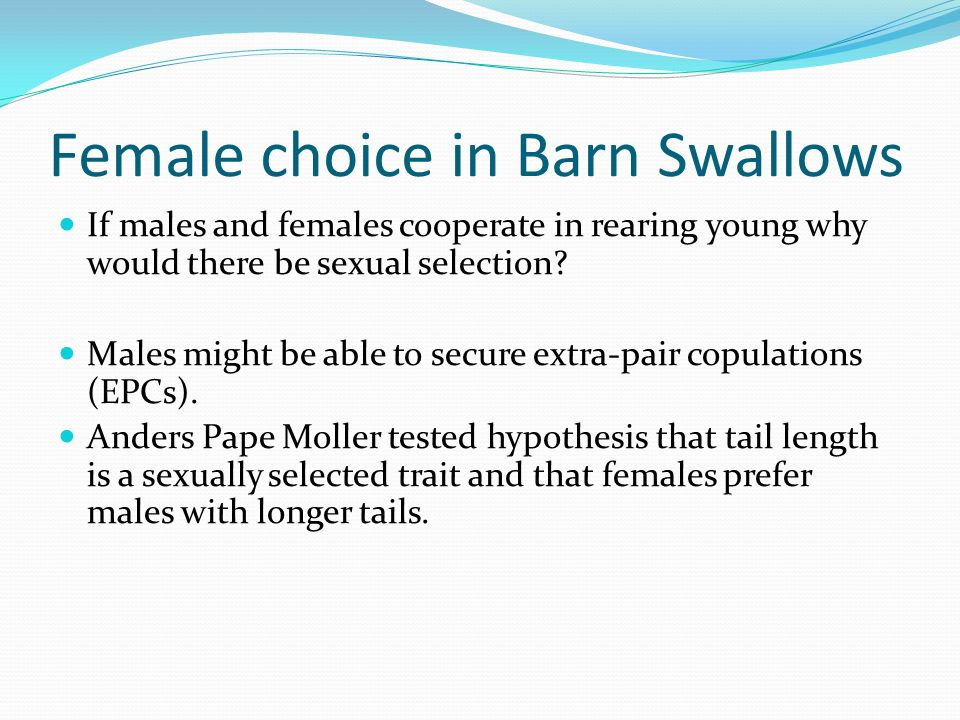 Female choice in Barn Swallows If males and females cooperate in rearing young why would there be sexual selection.