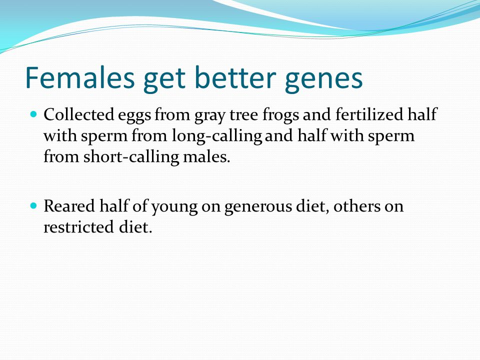 Females get better genes Collected eggs from gray tree frogs and fertilized half with sperm from long-calling and half with sperm from short-calling males.
