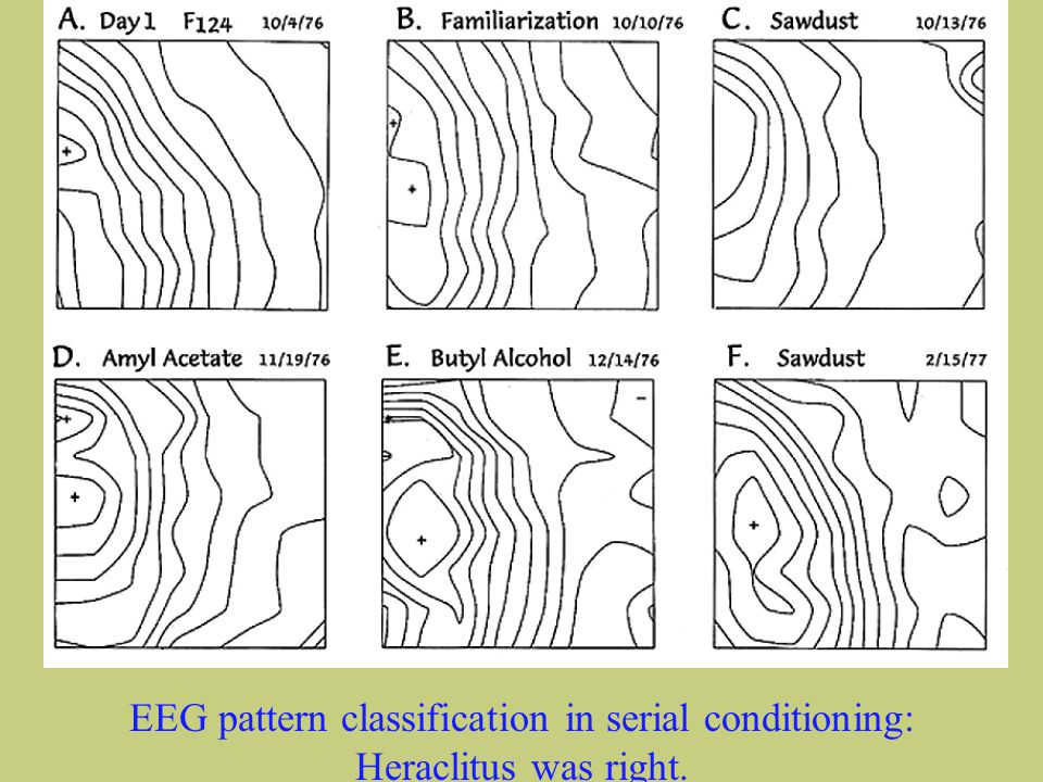 Walter J Freeman University of California at Berkeley 2 EEG pattern classification in serial conditioning: Heraclitus was right.