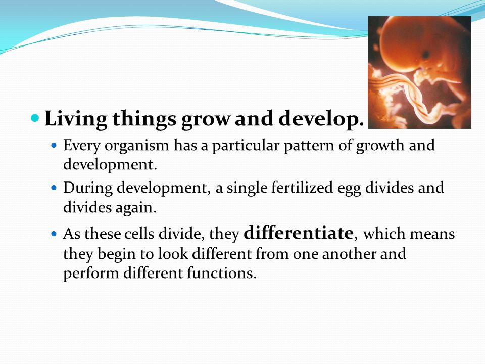 Living things grow and develop. Every organism has a particular pattern of growth and development.