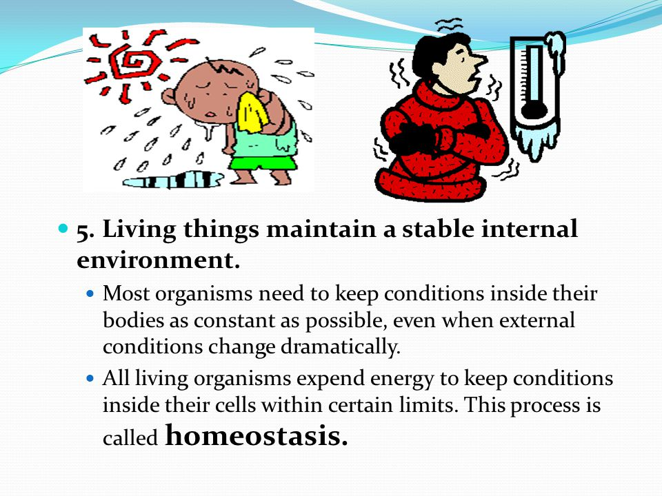 6.Living things obtain and use materials and energy.