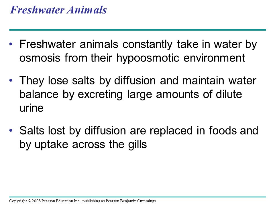 Copyright © 2008 Pearson Education Inc., publishing as Pearson Benjamin Cummings Freshwater Animals Freshwater animals constantly take in water by osm