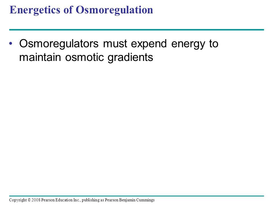 Copyright © 2008 Pearson Education Inc., publishing as Pearson Benjamin Cummings Energetics of Osmoregulation Osmoregulators must expend energy to mai