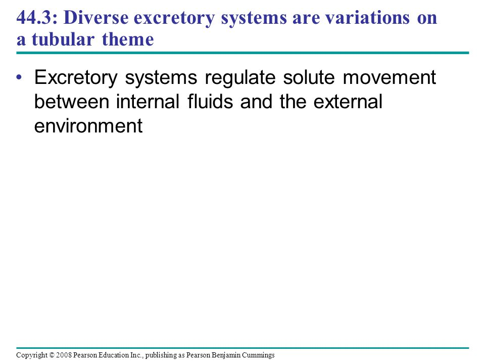 Copyright © 2008 Pearson Education Inc., publishing as Pearson Benjamin Cummings 44.3: Diverse excretory systems are variations on a tubular theme Exc