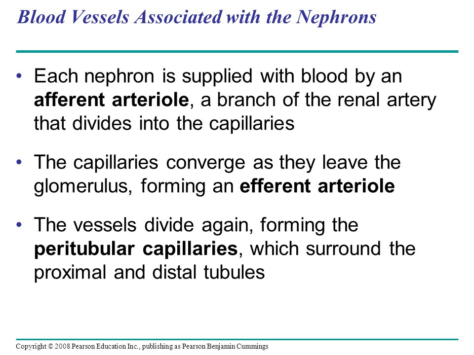 Copyright © 2008 Pearson Education Inc., publishing as Pearson Benjamin Cummings Blood Vessels Associated with the Nephrons Each nephron is supplied with blood by an afferent arteriole, a branch of the renal artery that divides into the capillaries The capillaries converge as they leave the glomerulus, forming an efferent arteriole The vessels divide again, forming the peritubular capillaries, which surround the proximal and distal tubules