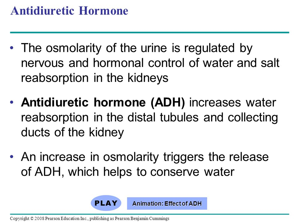 Copyright © 2008 Pearson Education Inc., publishing as Pearson Benjamin Cummings Antidiuretic Hormone The osmolarity of the urine is regulated by nerv