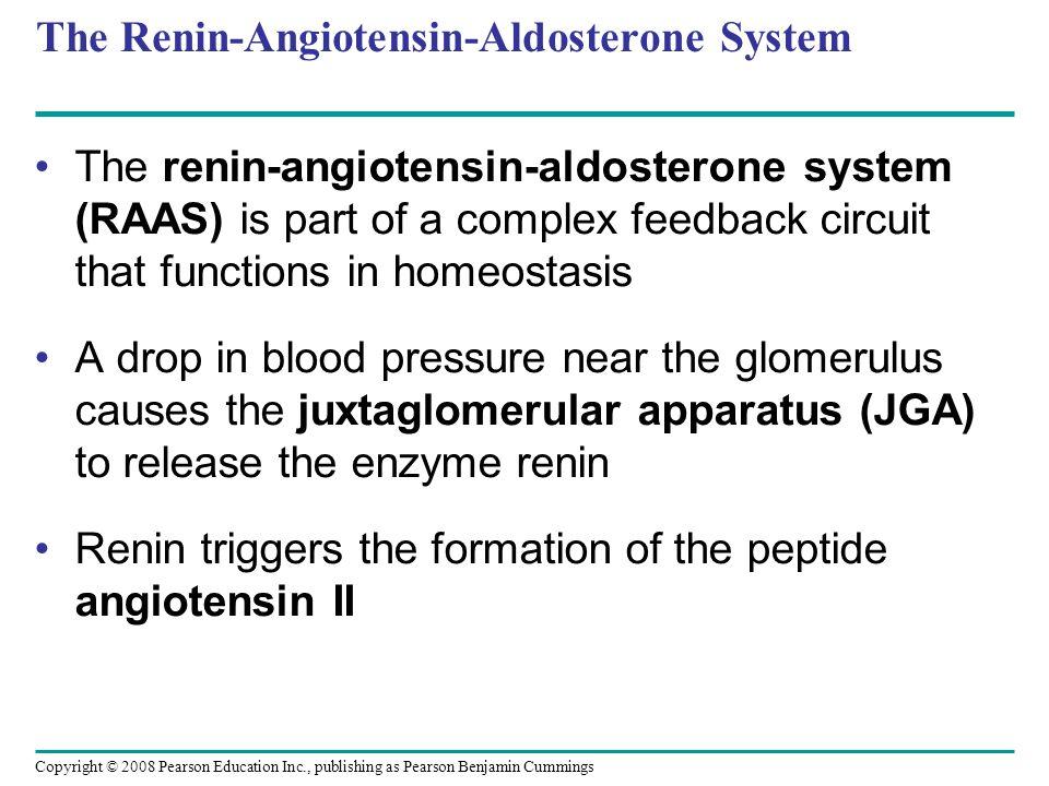 Copyright © 2008 Pearson Education Inc., publishing as Pearson Benjamin Cummings The Renin-Angiotensin-Aldosterone System The renin-angiotensin-aldost