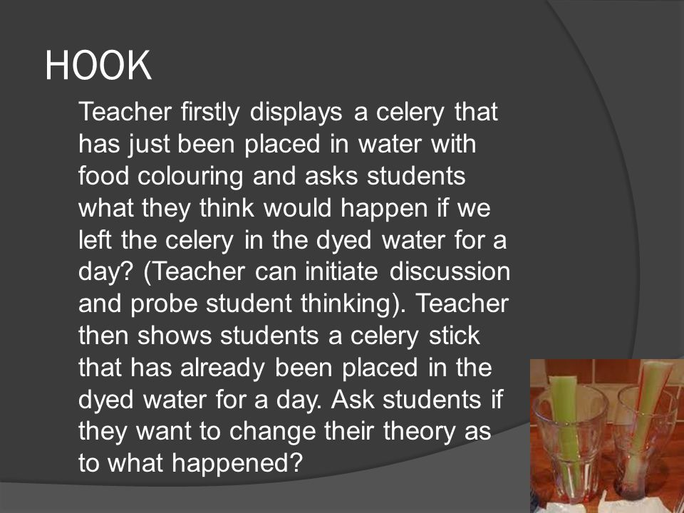 HOOK Teacher firstly displays a celery that has just been placed in water with food colouring and asks students what they think would happen if we left the celery in the dyed water for a day.