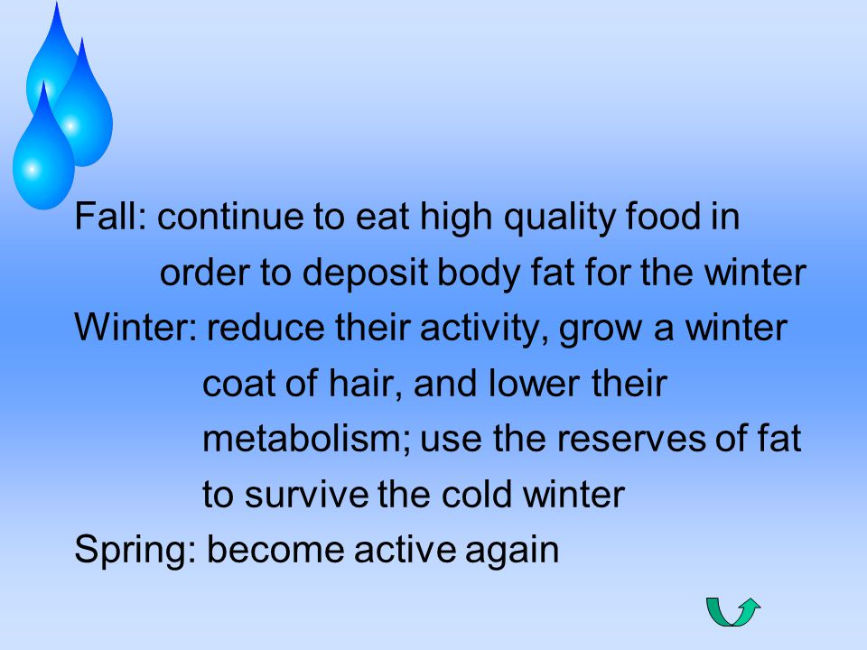 Fall: continue to eat high quality food in order to deposit body fat for the winter Winter: reduce their activity, grow a winter coat of hair, and lower their metabolism; use the reserves of fat to survive the cold winter Spring: become active again