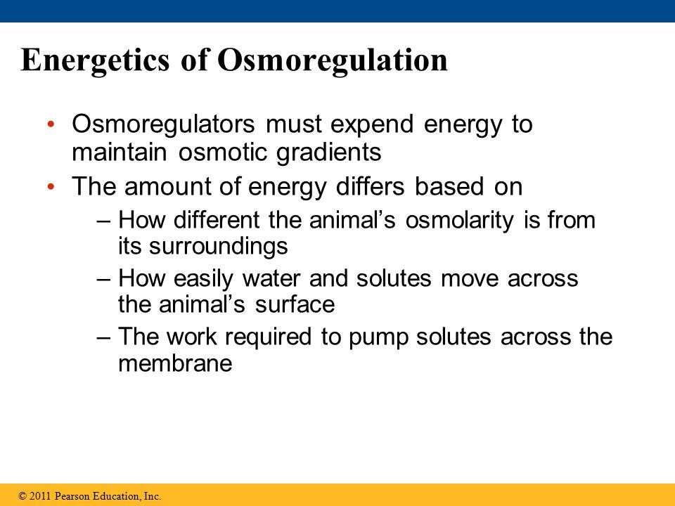 Energetics of Osmoregulation Osmoregulators must expend energy to maintain osmotic gradients The amount of energy differs based on –How different the