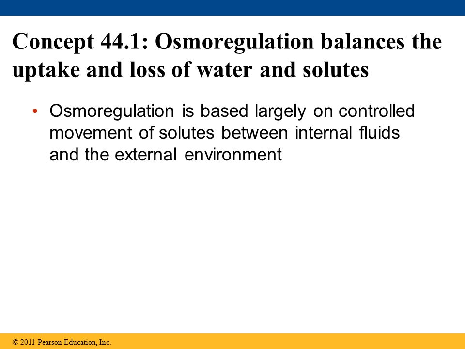 Concept 44.1: Osmoregulation balances the uptake and loss of water and solutes Osmoregulation is based largely on controlled movement of solutes betwe
