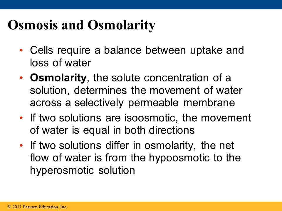 Figure 44.2 Selectively permeable membrane Solutes Water Net water flow Hyperosmotic side: Hypoosmotic side: Lower free H 2 O concentration Higher solute concentration Higher free H 2 O concentration Lower solute concentration