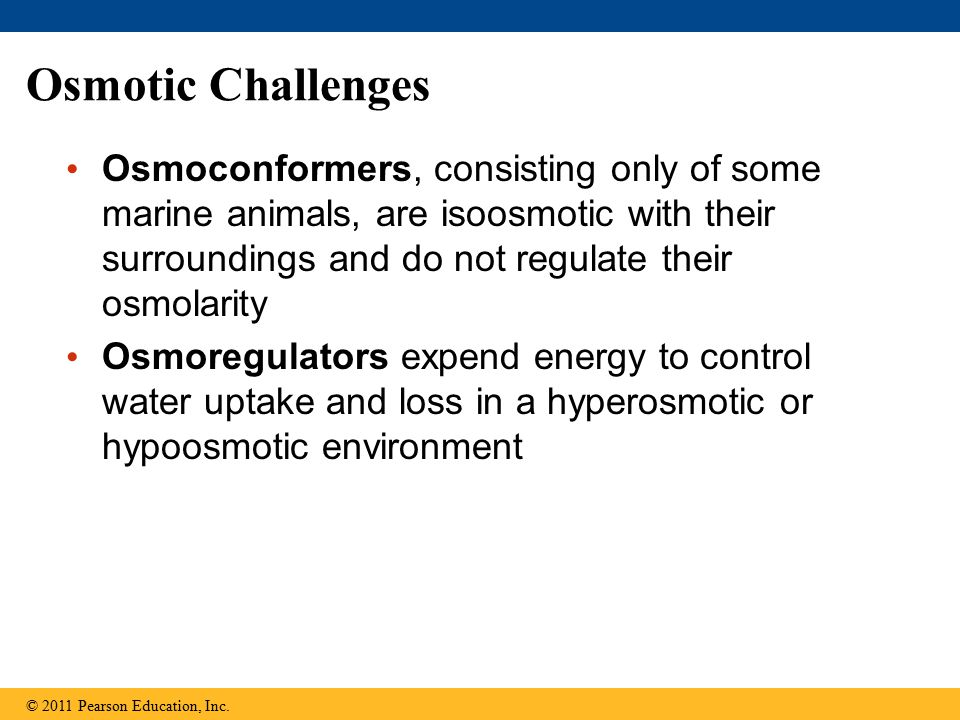 Osmotic Challenges Osmoconformers, consisting only of some marine animals, are isoosmotic with their surroundings and do not regulate their osmolarity