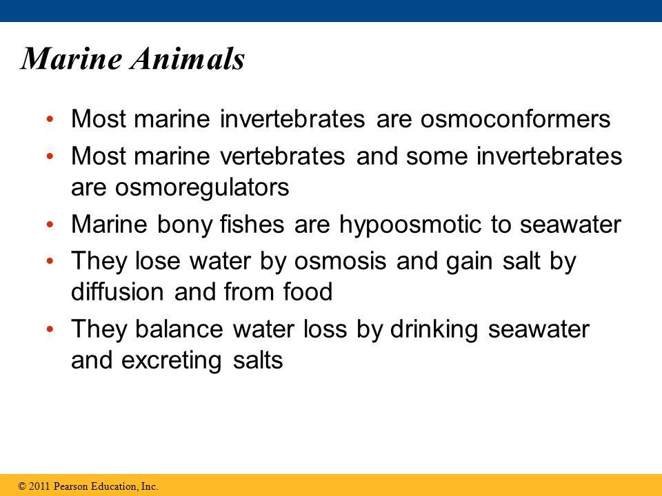 Marine Animals Most marine invertebrates are osmoconformers Most marine vertebrates and some invertebrates are osmoregulators Marine bony fishes are h