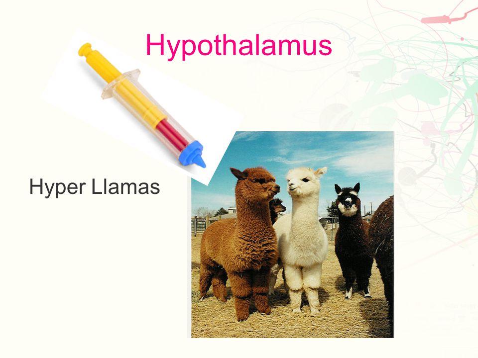 Thalamus Hal Amos