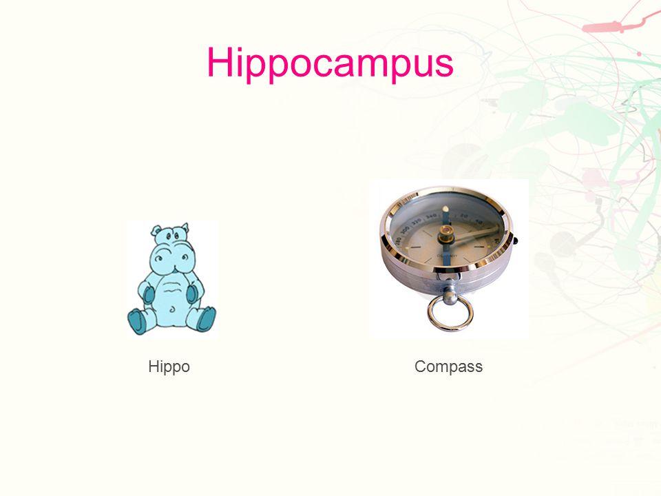 Hypothalamus Hyper Llamas