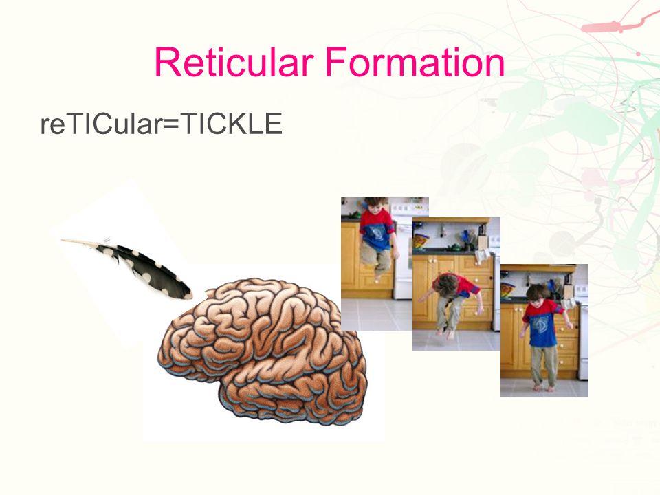 Cerebellum Bell