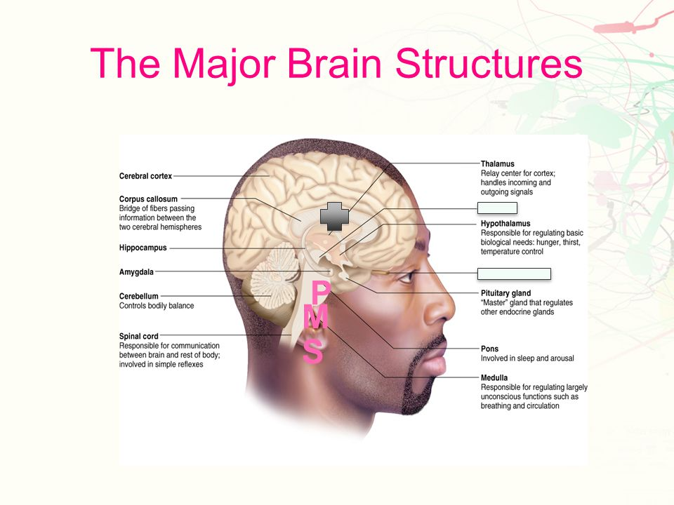 Axon Terminal Synaptic knob Synaptic vessel Neurotransmitter Synapse Receptor Sites
