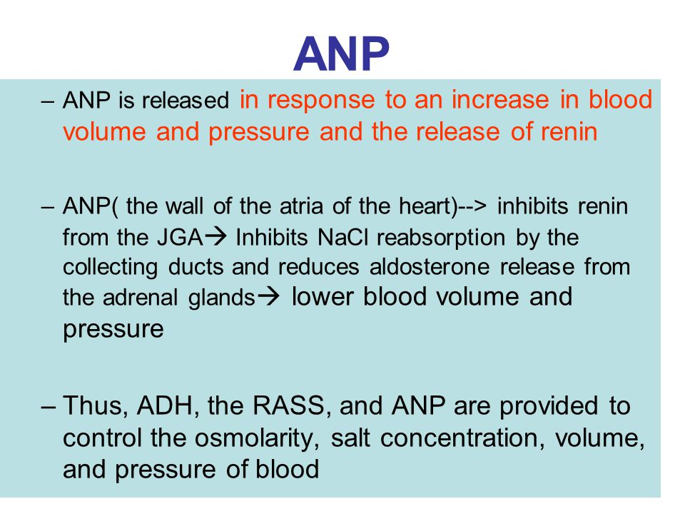 ANP –ANP is released in response to an increase in blood volume and pressure and the release of renin –ANP( the wall of the atria of the heart)--> inh