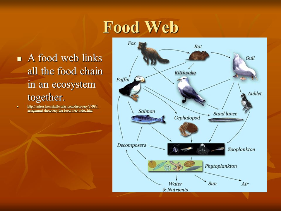 Food Web A food web links all the food chain in an ecosystem together.