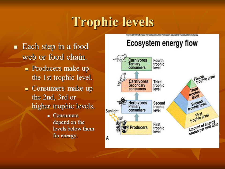 Trophic levels Each step in a food web or food chain.