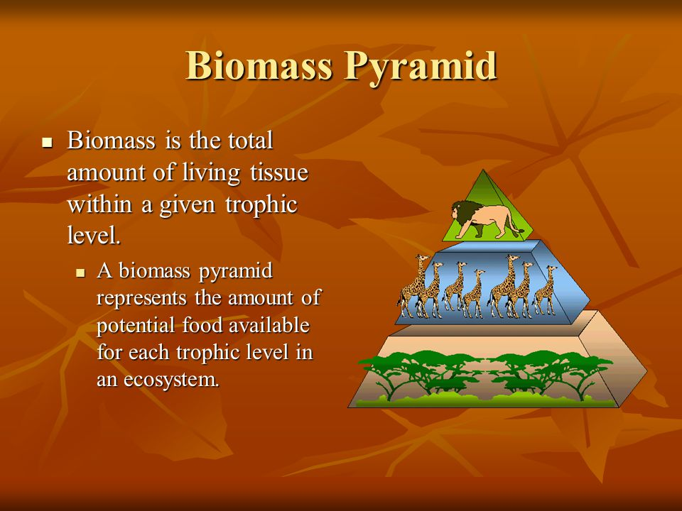 Biomass Pyramid Biomass is the total amount of living tissue within a given trophic level.