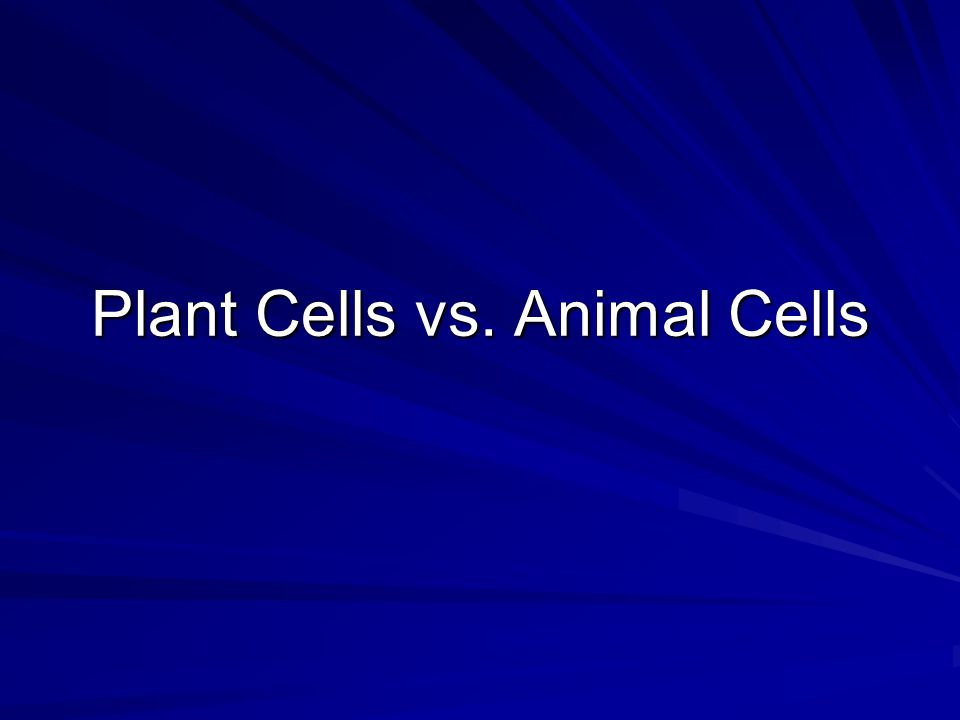 Plant Cells vs. Animal Cells